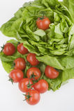 Green lettuse salad and tomato fresh food Stock Image