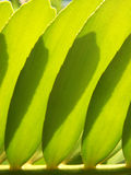 Green leves. Abstract arrangement of green leaves stock images