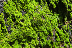 Green lichen Stock Image