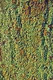 Green Lichen Stock Images