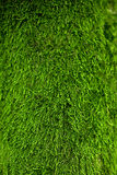 Green lichen background. Natura gras Stock Images