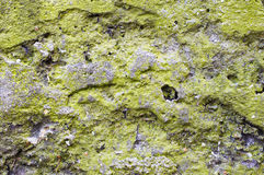 Green lichen on concrete slab. Stock Image