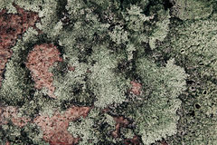 Green lichen on pink granite stone. Abstract natural background. Stock Photos