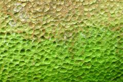 Green lichen pit surface Royalty Free Stock Images