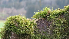 Green Lichen on Rocks Stock Images
