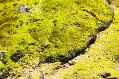 Green Lichen on Stone Stock Images