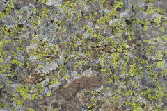 Green lichen in the stone Stock Photography