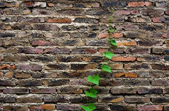 Green life on brick Stock Photo