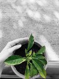 Green life Stock Image