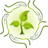Green life in hands,  Stock Photos