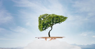 Green life on tray. Environmental concept with hand hold tray with green tree Royalty Free Stock Photo