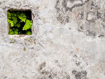 Green life in the wall Stock Image