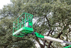 Green Lift by Green Tree Royalty Free Stock Image