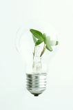 Green light bulb Stock Images