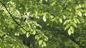 Green light leaves natural background. stock video footage