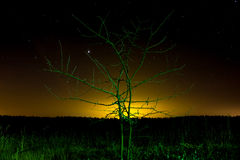 Green light lonely  tree Stock Photos