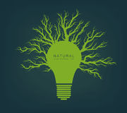 Green light from tree and branches Royalty Free Stock Photos