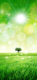 Green like a meadow in the sun Royalty Free Stock Photography