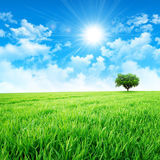 Green like a meadow in the sun. Intense sun breaking through the clouds upon a green grass field Royalty Free Stock Images