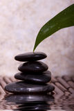 Green lily leaf touching balanced pebble rocks Royalty Free Stock Image