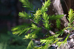 Green Limbs and Tree Branches royalty free stock image