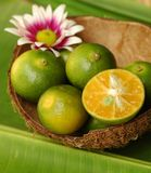 Green lime. In coconut shell royalty free stock photos