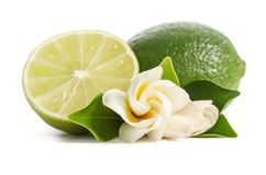 Green lime with half of juicy lime and beautifull flower on white background royalty free stock images