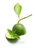 Green lime with mint leaf Royalty Free Stock Image