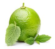 Green lime with mint leaf Stock Images