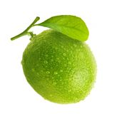 Green lime with water drops royalty free stock photo