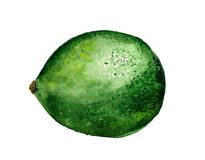Green lime Stock Image