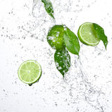 Green limes and Splashing water. Over white Royalty Free Stock Photography