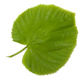Green linden-tree leaf Royalty Free Stock Images