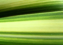 Green Line Leaf 5 Royalty Free Stock Photos