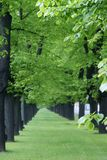 Green lined trees Royalty Free Stock Images