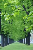 Green lined trees Stock Images