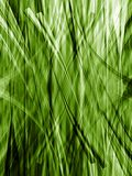 Green lines of grass Stock Images