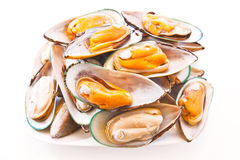 Green lip mussels Stock Image