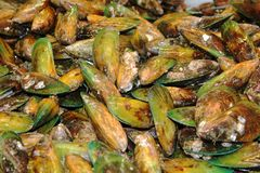 Green lipped mussels from New Zealand. Full frame image of fresh green lipped mussels from New Zealand stock photo