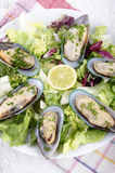 Green lipped mussels from new zealand Royalty Free Stock Image