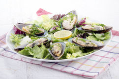 Green lipped mussels from new zealand Royalty Free Stock Photos