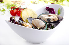 Green lipped mussels with salad Royalty Free Stock Images