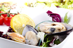 Green lipped mussels with salad Stock Images