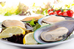 Green lipped mussels with salad Stock Photos