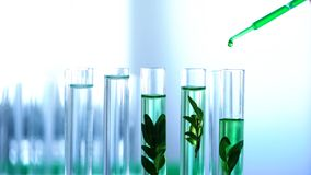 Green liquid poured in laboratory tubes with plants, genetic breeding, cosmetics royalty free stock photography