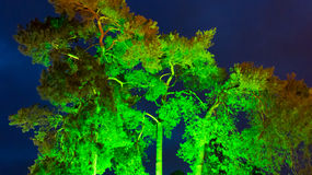 Green lit tree at twilight Stock Photography