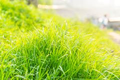 Suburban green grass material. Green little fresh grass photos stock photos