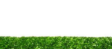 Green Living Playground. Lawn greensward grass sward turf Living garden outdoor park forest meadow blade grass frame art cut  green decorate bedeck material Stock Images