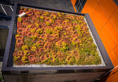 Green living  roof Royalty Free Stock Images