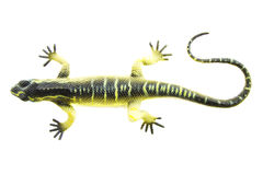 The green lizard Royalty Free Stock Photo